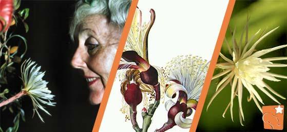 Margaret Mee - A paixão de uma artista inglesa pelas flores do Brasil