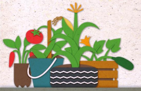 Manual de Agricultura Urbana em PDF grátis